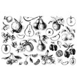 hand drawn black and white fruits collection vector image vector image