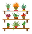 office plants on shelves vector image vector image