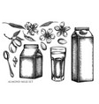 set hand drawn black and white almond vector image