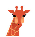 wild giraffe face on isolated background vector image vector image