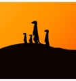 a group of meerkats vector image