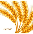 Background with wheat Agricultural image natural vector image