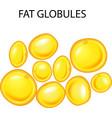 cartoon of fat globules vector image