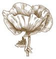 engraving poppy flower vector image vector image