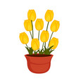 isolated flower pot with tulip flowers vector image vector image