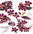 set of detailed orchid flowers vector image vector image
