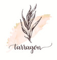 tarragon hand drawn sketch on watercolor paint vector image vector image