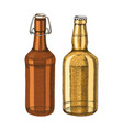 hand drawn beer bottles vector image vector image