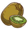 kiwi tropical fruit sliced part healthy eating vector image
