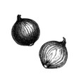 onion hand-sketched set full and half cutout vector image