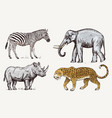 set of african animals rhinoceros elephant vector image vector image