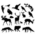 woodland forest animals living in european forest vector image