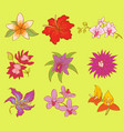 beautiful watercolor flower set vector image vector image