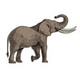 hand drawn african elephants with black line art vector image
