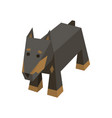 isometric doberman vector image