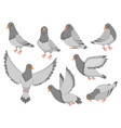 cartoon pigeon city dove bird flying pigeons and vector image vector image