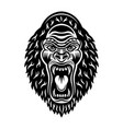 gorilla head with open mouth monochrome vector image