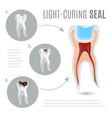 realistic medical poster with stages of tooth vector image