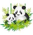 giant panda vector image