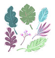 tropical leaves collection isolated on white vector image vector image