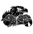 black silhouette parrot eagle and rooster head vector image vector image