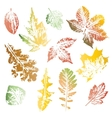 collection autumn leaves imprints vector image