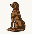golden labrador retriever dog vector image