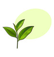 hand drawn fresh green tea leaf bud twig vector image