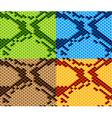 snake skin seamless wallpaper vector image vector image
