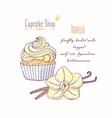 hand drawn cupcake vanilla flavor vector image vector image