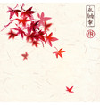 red japanese maple leaves on handmade rice paper vector image vector image