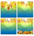 Shiny Autumn Natural Leaves Background Set