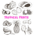 tropical fruits sketch vector image