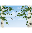 birch on sky background vector image vector image