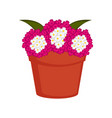 isolated pot with verbena flowers vector image vector image