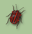 Red beetle vector image vector image