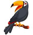 Cute cartoon toucan bird vector image
