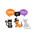 Happy halloween - cats in monsters costumes