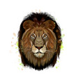 lion head portrait from a splash watercolor vector image vector image