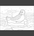 seal on an ice floe vector image