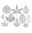 set of hand drawn doodle line leaves vector image