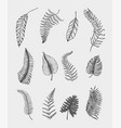 tropical or exotic leaves leaf different vector image vector image
