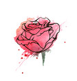 watercolor hand drawn rose vector image vector image