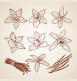 biology aroma flowers of cinnamon vector image