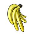 cartoon bananas vector image