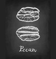 chalk sketch of pecan vector image vector image
