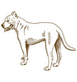 engraving antique pitbull vector image