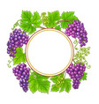 grapes branches c frame on white background vector image vector image