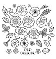 graphic floral collection vector image