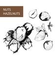 Nuts Hazelnuts vector image vector image